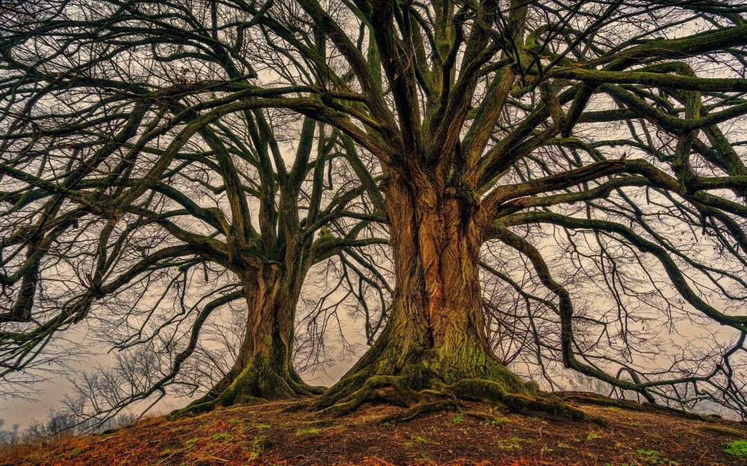 Can tree-search-algorithms be a game-changer in banking?